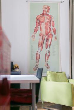 Muskeldarstellung Craniosacrale Therapie Düsseldorf Osteopathie